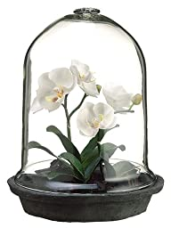 ALLSTATE FLORAL Phalaenopsis Orchid Plant in a Glass Terrarium, 12\