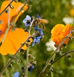 David's Garden Seeds Wildflower Bee Feed Mix D1397 (Multi Colored) 1000 Open Pollinated Seeds