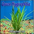 Green Hygrophila Live Aquarium Plant 3 bunches