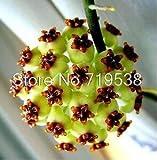 ホヤの種子、鉢植えの花の種、様々な完全なサクララン種子10個/パック