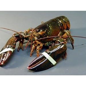 ぷりっぷり!ジューシー特大活アメリカ東海岸産 ロブスター(オマール海老[エビ])450g×2尾セット
