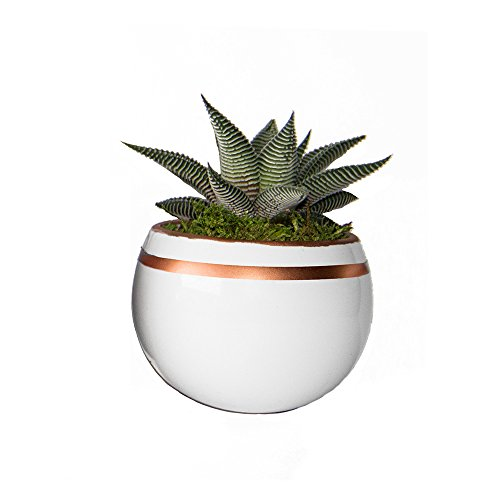 LiveTrends Life Magnetic - Living Succulent Decoration (White and Copper) (Air Plant In Pot compare prices)