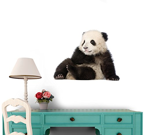 Giant Panda (6 Months) - Ailuropoda Melanoleuca Wall Decal - 36 Inches W X 27 Inches H - Peel And Stick Removable Graphic front-666706