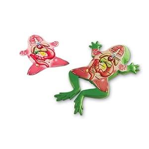 Cross Section Frog Model