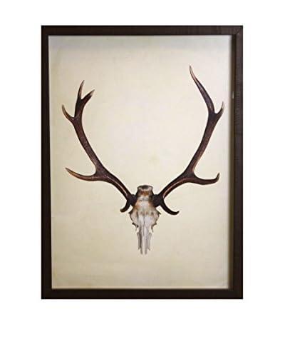 Deer Antlers Distressed Brown Shadowbox Art
