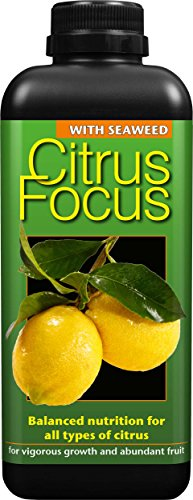 citrus-focus-balanced-concentrated-liquid-fertiliser-1-litre