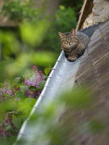 Cat in the Gutter - 52