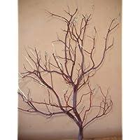 Manzanita Branches 33
