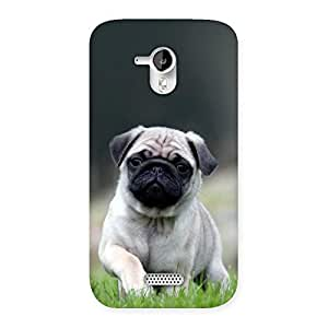 Ajay Enterprises Exant Pugo Back Case Cover for Micromax Canvas HD A116