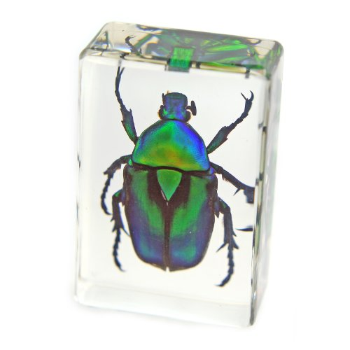 "Green Chafer Beetle Paperweight (1.8x1.1x0.8"")"