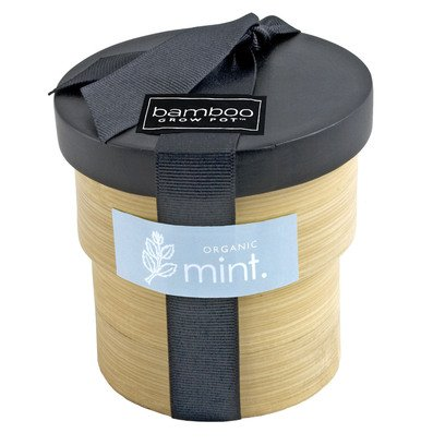Organic Mint Seed Kit in Bamboo Grow Container (Mint Starter Kit compare prices)