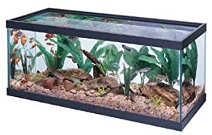All glass aquarium co 20 gallon long tank for 20 gallon fish tank dimensions