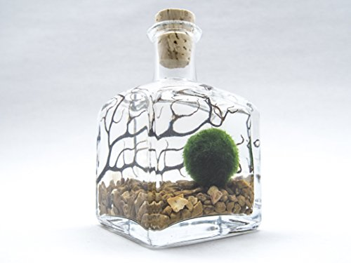 Aquatic Arts Marimo Aquarium Kit, Small