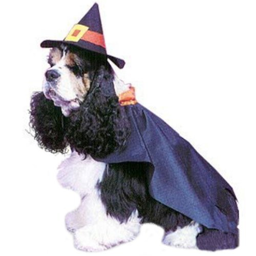 PET COSTUME,WITCH