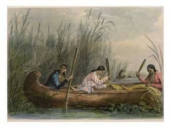 """Gathering Wild Rice"" by Seth Eastman"
