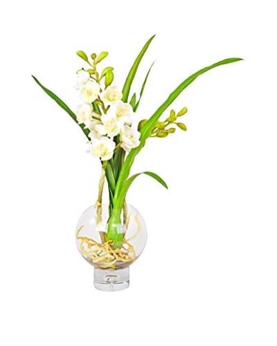 Creative Displays Cymbidium Orchid Modern Planter, White/Green