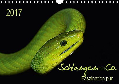schlangen-und-co-faszination-pur-wandkalender-2017-din-a4-quer-schlangen-und-reptilien-in-ihrer-ganz