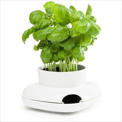 Sagaform Herb Pot Single Ceramic Herb Pot Small