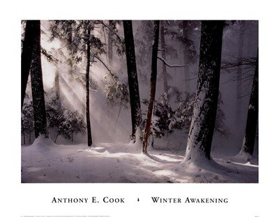 Winter Awakening by Anthony Cook