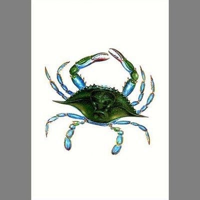 Female Blue Crab Vertical Flag Color: White, Size: 40