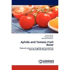 Tomato Fruit Borer