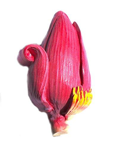 Banana Flower ,Thai Souvenir High Quality Resin 3d VEGETABLE Fridge Magnet (Banana Resin compare prices)
