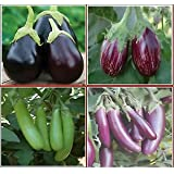 Brinjal 4 Types Seeds Combo By Seedscare India (Crypton Kranti, MK-majrikotta, Green Long And Purple Long)
