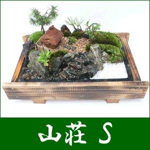 盆栽・盆景 山荘(S)