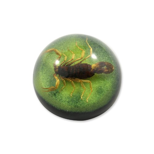 """2.5 """" Golden Scorpion Dome Paperweight Green"""