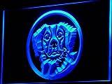 Enseigne Lumineuse i658 b Brittany Spaniel Dog Pet Shop Neon Light Sign