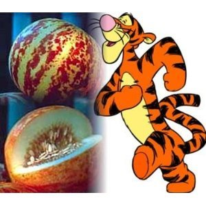 Seeds and Things Rare Tigger Melon 30 Seeds - Heirloom - Delicious -Easy