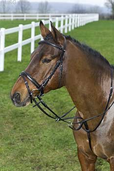 Replacement flash noseband bridle