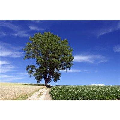 北海道上川郡美瑛町の草原の草原に立つ一本の木の草原のポストカード photo by 宮西範直ポストカード-えはがき絵葉書