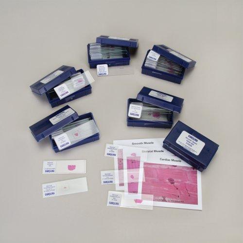 Tissue Types Microscope Slide Set