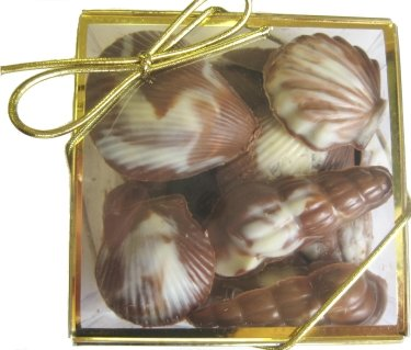Chocolate Seashell Gift Box -- Great Party Favor