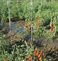 Tomato Trellis Twine Nylon 1000 Foot Roll White 60# Strength