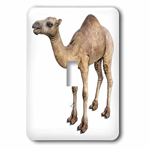 Boehm Graphics Animal - Dromedary Camel in Near Side Profile - Light Switch Covers - single toggle switch (lsp_239821_1)