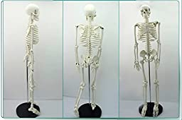 Doc.Royal Educational Medical Science Classic 85cm Full Adult Human Anatomical Skeleton Model