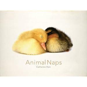 Animal Naps