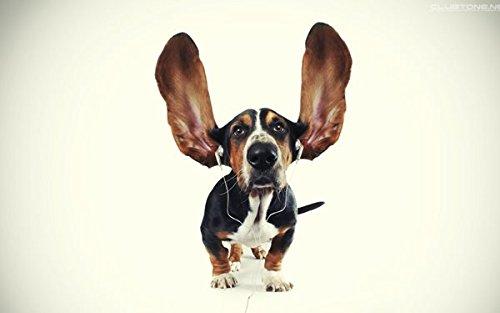 [dog ears headphones animal humor Home Decoration Canvas Poster Print] (Wizard Of Oz Tattoo Ideas)