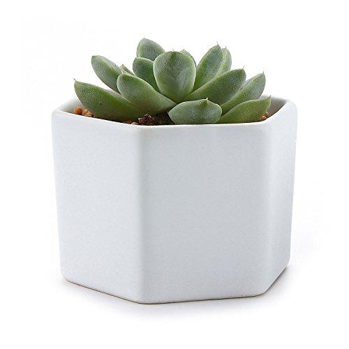 t4u-7-cm-en-ceramique-en-six-tailles-semi-lustre-surface-sucuulent-cactus-pot-de-fleurs-pot-de-fleur