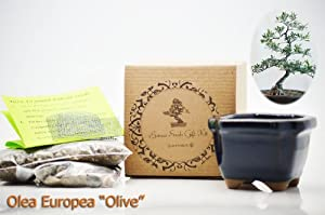 9GreenBox - Olea Europea