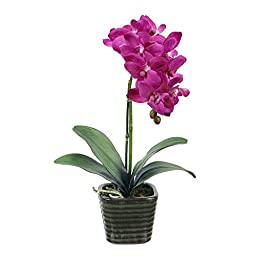 Jane Seymour Potted Orchid 14 in. Silk Flower Arrangement