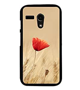 Orange Flower 2D Hard Polycarbonate Designer Back Case Cover for Motorola Moto G :: Motorola Moto G (1St Gen)