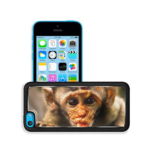 Baby Monkey Baboons Wildlife Zoo Apple Iphone 5C Snap Cover Premium Aluminium Design Back Plate Case Customized Made To Order Support Ready 5 Inch (125Mm) X 2 3/8 Inch (62Mm) X 3/8 Inch (12Mm) Luxlady Iphone 5C Professional Cases Touch Accessories Graphic front-1056645