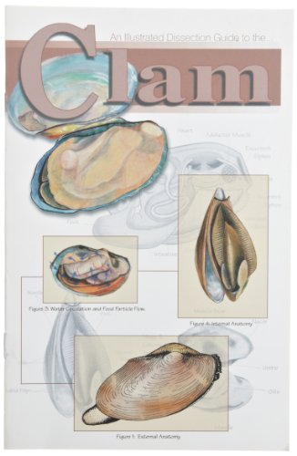 Frey Scientific 597006 Mini-Guide to Clam Dissection