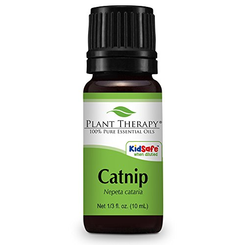 Catnip Essential Oil. 10 ml (1/3 oz). 100% Pure, Undiluted, Therapeutic Grade.