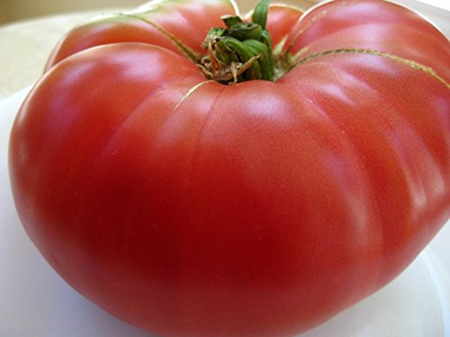 75+ Mortgage Lifter Tomato Seeds- Heirloom Variety- by Ohio Heirloom Seeds (Tomato Seeds Mortgage Lifter compare prices)