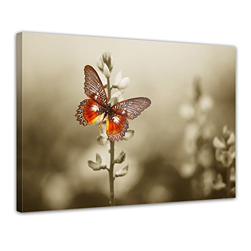bilderdepot24-wall-art-canvas-picture-red-butterfly-on-a-dark-field-1969-inch-x-1575-inch-gallery-wr