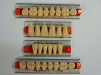Halloween Horror Prop - Dental Quality Resin Teeth for Prop Building! by Dead Head Props
